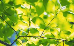 Green foliage branches