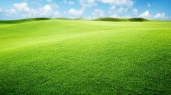 Green Landscape Wallpaper 12971
