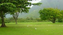 Green Landscape Wallpapers 34