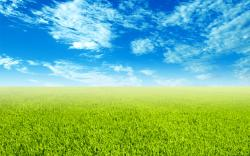 Grass sky 14612 - Green sky - Landscape scenery. Download Grass sky 14612 - Green sky - Landscape scenery wallpaper, Grass sky high-definition picture, ...