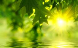 Green leaves water