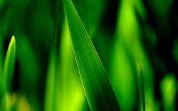 Grass Green Macro Nature HD Wallpaper