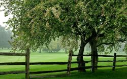 Green Meadow Tree Fence Wallpapers Pictures Photos Images. «