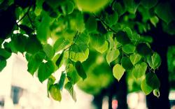 Green tree foliage