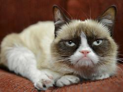 Grumpy Cat Free Background Pictures 5603 High Resolution