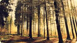 Grunge Forest