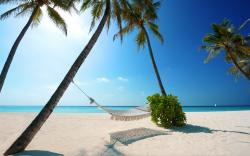 Beach With Hammock Background 1 HD Wallpapers