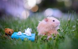 Hamster teatime
