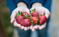 Hands Berries Red Strawberry Mood