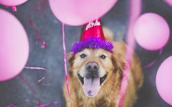 Happy Birthday Dog Friend