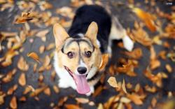 Happy dog wallpaper 2560x1600