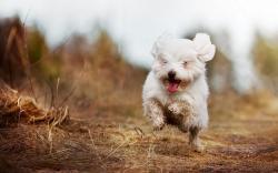 Happy dog HQ Wallpaper