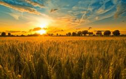 Where the harvest is ripe and workers (and resources) are few | Issachar Initiative