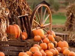 Backgrounds for Gt Fall Harvest Wallpaper 1600x1200px