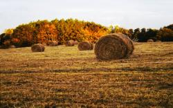 Hay Field wallpaper