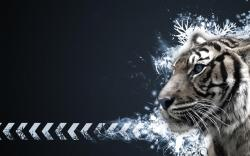 Chic Tigers The Animal Kingdom Wallpaper Xpx Lovely