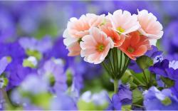 desktop wallpapers hd flowers6