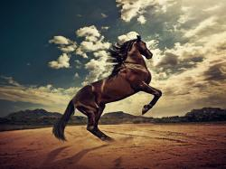 Download Startled Horse Hd Wallpapers Free by Warnerboutique