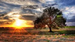 A tree with sunset in the background in hdr