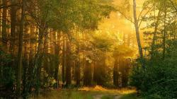 Forest HDR HD Wallpapers-1