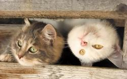Headlong cat Wallpapers Pictures Photos Images. «
