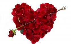 Heart Flowers Wallpaper Hd Free Download