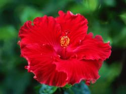 Hibiscus are beautiful flowers that seem to grow more in the northern part of the state. I tried growing some when I lived south of Fort Worth, ...
