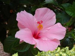 You can use a variables Hibiscus Flower Blooming Season, http://typesofflower.com/hibiscus-flower-flower-climate/hibiscus-flower-blooming-season/, ...