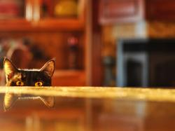 Cute Animals Wallpaper, Cat's Eyes, Hiding Itself, Can Rush Out At Any Time