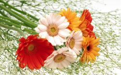 Flowers Wallpapers With High Resolution 31