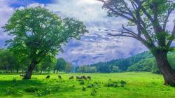 Description: The Wallpaper above is Highlands scenery Wallpaper in Resolution 1920x1080. Choose your Resolution and Download Highlands scenery Wallpaper
