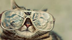 Cats Glasses Hipster Fresh New Hd Wallpaper 1920x1080px