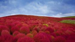 Hitachi Seaside Park Wallpapers Hitachi Seaside Park Wallpapers ...