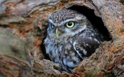 Hollow Tree Trunk Bird Owl