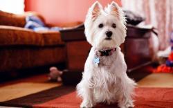 Home Cute White Dog Photo