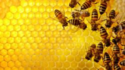 Honeycomb silenced — be quiet / bee quiet