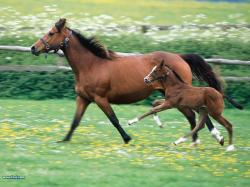 horse - horses Photo