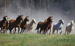 -Animals-Horses-Ranch-Montana-Fresh-New-Hd-Wallpaper