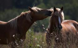 Horse Tender