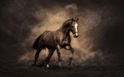 horse-wallpaper-09.jpg ...