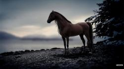 brown horse wallpaper android Wallpaper