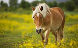 Amazing Horse Wallpaper; Fantastic Horse Wallpaper ...