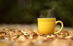 Hot Tea Cup Wallpaper 42218 1920x1080 px