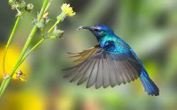 """The hummingbird replied, """"I heard that the sky might fall today, and so I am ready to help hold it up, should it fall."""""""