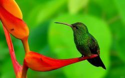 Latest Humming Bird HD Wallpaper Free Download