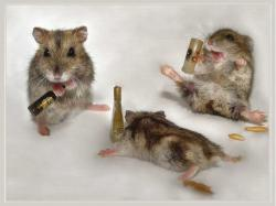 Drunk Mice - animal-humor Wallpaper