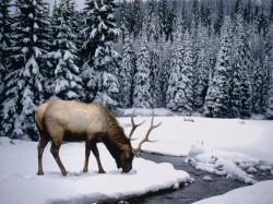 Hunting Wallpaper