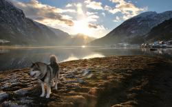 Dog Husky Sunlight Landscape Lake Mountains wallpaper background