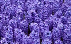 Hyacinth 20170 1920x1080 px
