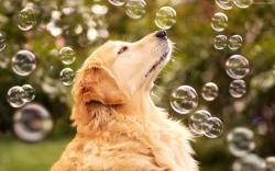 download images of gentle dogs